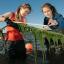 Students studying seaweed