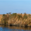 More frequent coastal storms are stressing ecosystems like these North Carolina marshes.