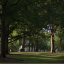 McCorkle Place old growth