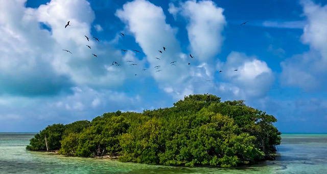 NGOs and Climate Change Brush Cay Mangrove Forest before Hurricane Dorian