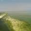 Wake of a boat driving through a harmful algal bloom on Lake Erie.
